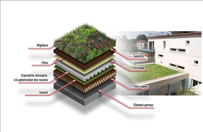 Methode traditionnelle pour fabriquer un toiture vegetale - Vegetaux pour toiture vegetalisee ...